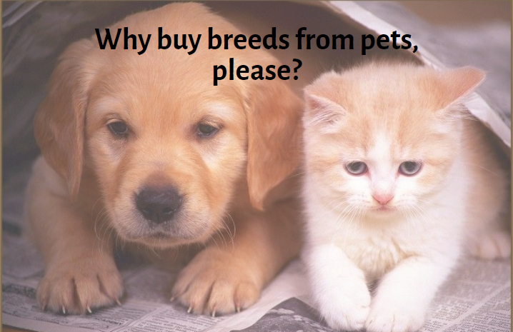 Why buy breeds from pets, please?