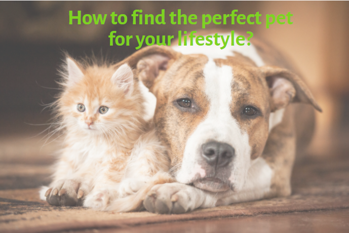 How to find the perfect pet for your lifestyle?